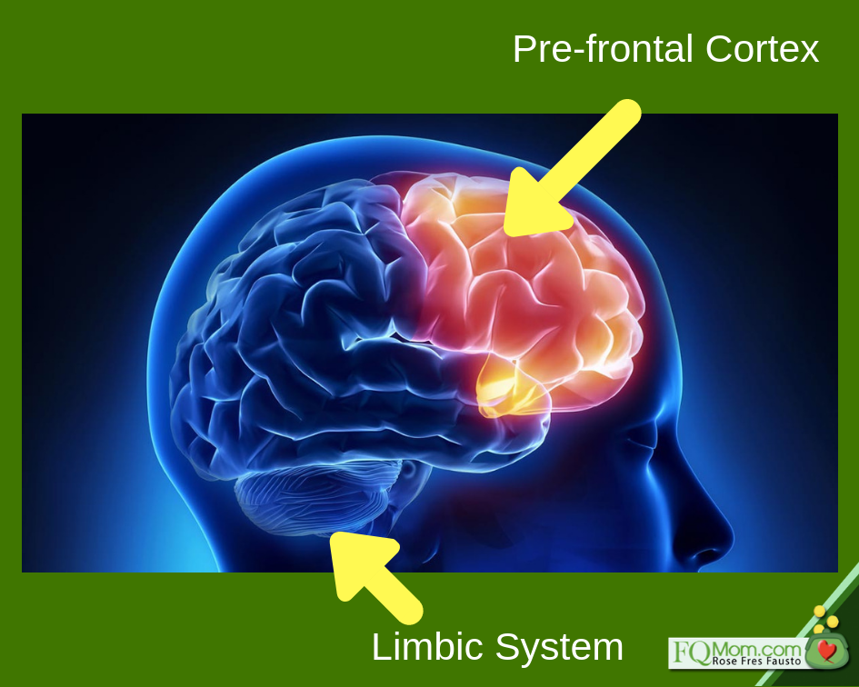 The limbic system (lower part) is responsible for our emotions, and usually irrational behavior. The pre-frontal cortex (upper part) is our rational brain that regulates our behavior in order to be a good member of society, and act for the benefit of what's good in the long-term.